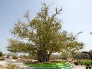 green_tree_kish_island1