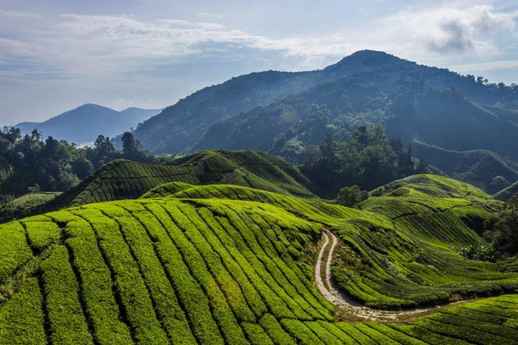 highlands-malaysia