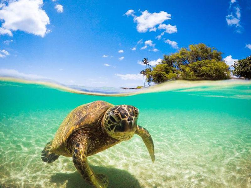 جزایر اوآهو هاوایی