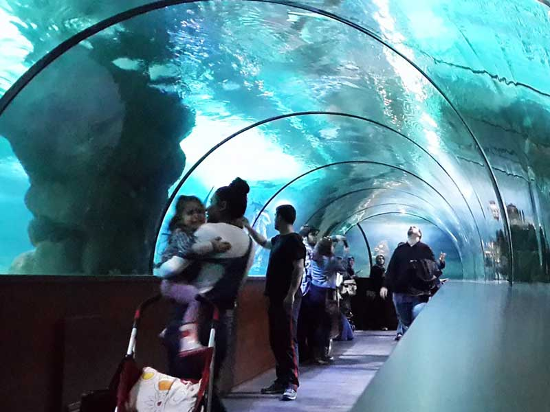 آکواریوم آکوا وگا (Aqua Vega Aquarium)