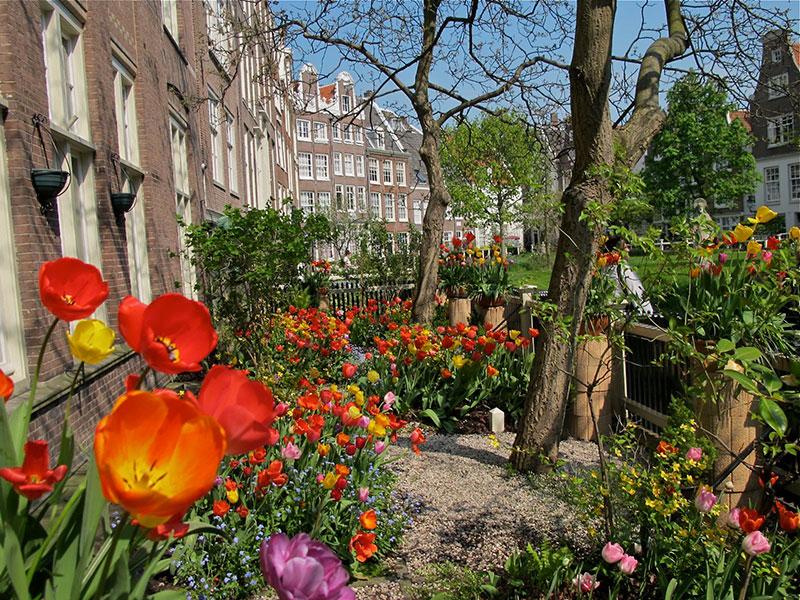 باغی در امستردام