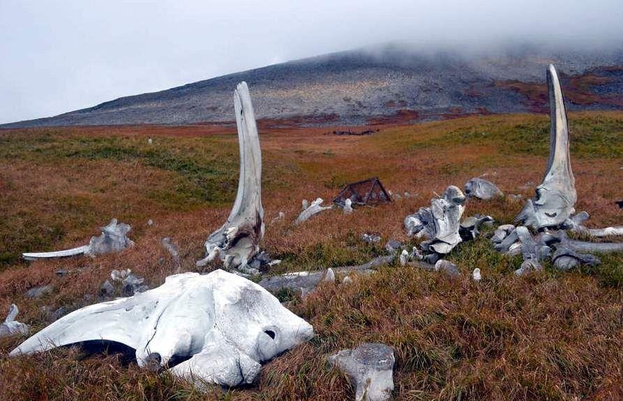 گذرگاه استخوان نهنگها، جزیره یتیمگران