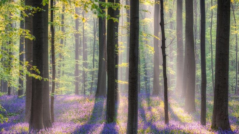 جنگل هالربوس