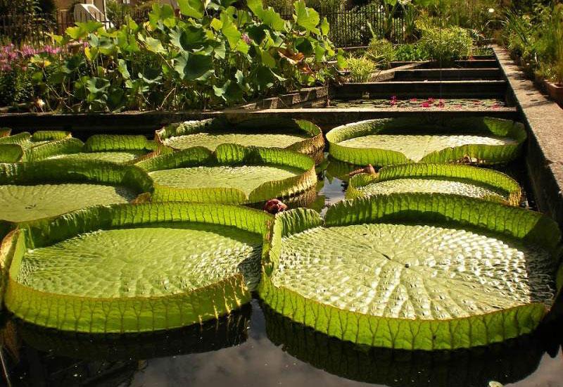باغ گیاه شناسی باتومی (Batumi Botanical Garden)