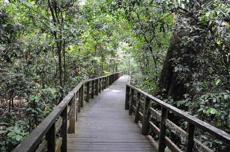 مرکز اکتشاف جنگل بارانی